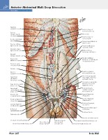 Frank H. Netter, MD - Atlas of Human Anatomy (6th ed ) 2014, page 283