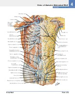 Frank H. Netter, MD - Atlas of Human Anatomy (6th ed ) 2014, page 288