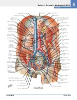 Frank H. Netter, MD - Atlas of Human Anatomy (6th ed ) 2014, page 296