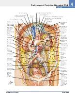 Frank H. Netter, MD - Atlas of Human Anatomy (6th ed ) 2014, page 304