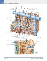 Frank H. Netter, MD - Atlas of Human Anatomy (6th ed ) 2014, page 315