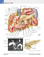 Frank H. Netter, MD - Atlas of Human Anatomy (6th ed ) 2014, page 317