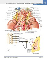 Frank H. Netter, MD - Atlas of Human Anatomy (6th ed ) 2014, page 356