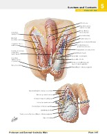 Frank H. Netter, MD - Atlas of Human Anatomy (6th ed ) 2014, page 408