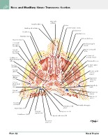 Frank H. Netter, MD - Atlas of Human Anatomy (6th ed ) 2014, page 59