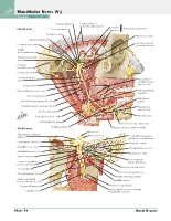 Frank H. Netter, MD - Atlas of Human Anatomy (6th ed ) 2014, page 67