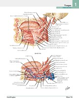 Frank H. Netter, MD - Atlas of Human Anatomy (6th ed ) 2014, page 76
